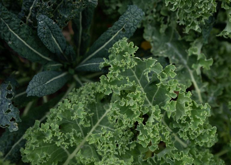 Bild på gröna växter